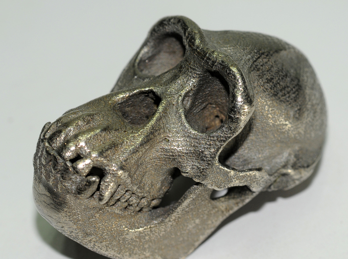 Chimpanzee skull - 77 mm 3d printed Stainless steel print
