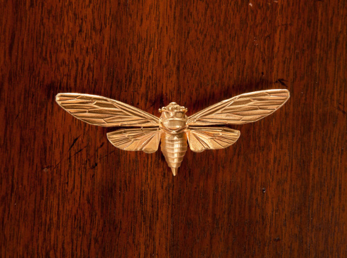 Raw Brass Cicada 3d printed