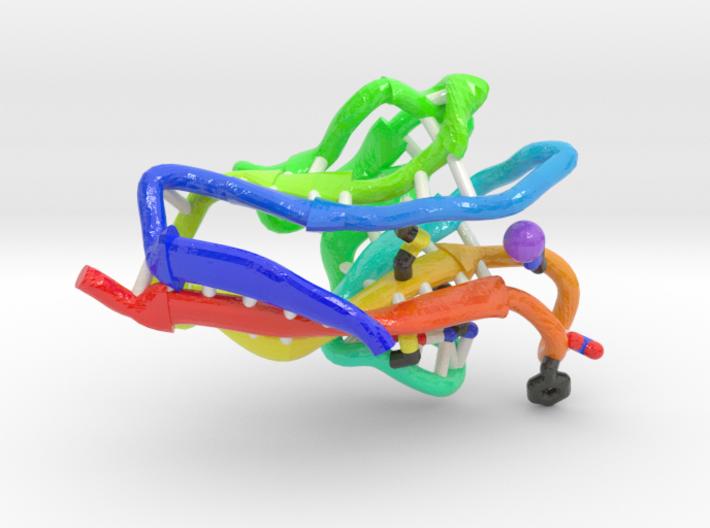 Hepatitis A Virus Cellular Receptor 1 3d printed