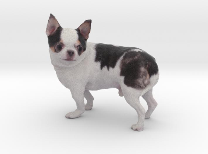 Scanned Chihuahua Dog -892 3d printed