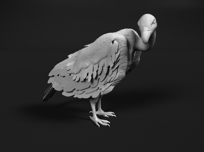 White-Backed Vulture 1:6 Standing 2 3d printed