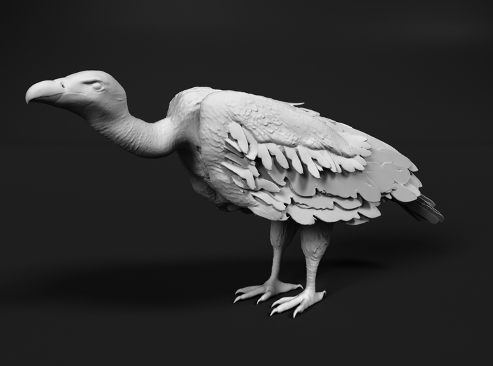 White-Backed Vulture 1:22 Standing 1 3d printed