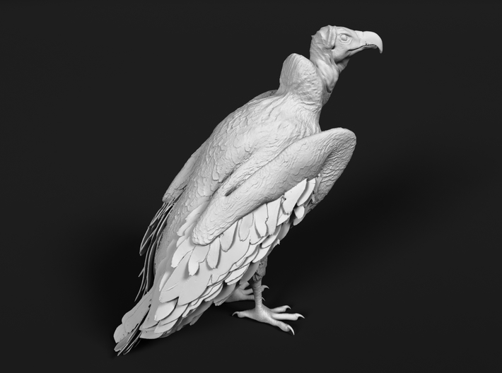 Lappet-Faced Vulture 1:22 Standing 3d printed