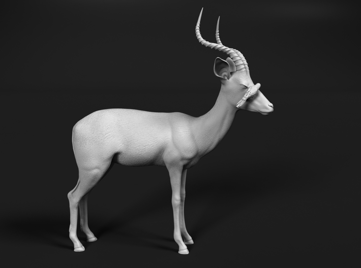 Impala 1:72 Male with Red-Billed Oxpecker 3d printed