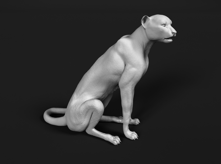 Cheetah 1:25 Sitting Male 3d printed