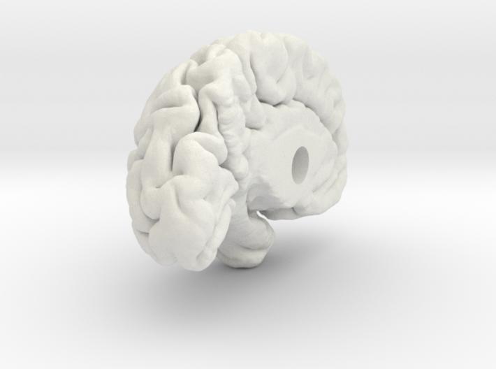 Left Brain Hemisphere 1/1 3d printed