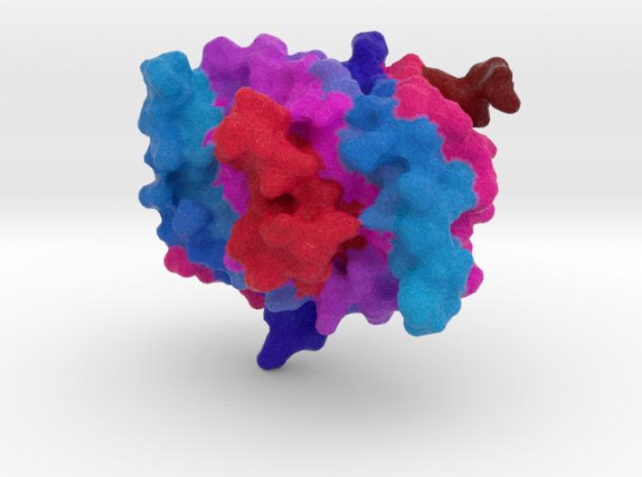 Single-Strand DNA-Binding Protein (SSB) 3d printed