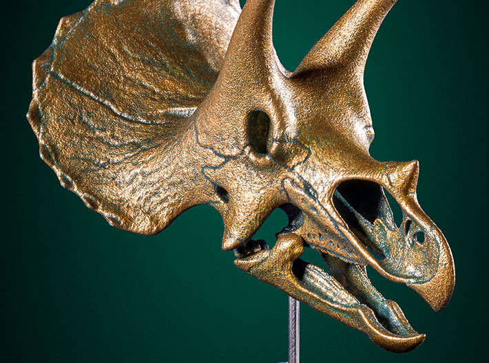 Triceratops skull - dinosaur model 3d printed Example shown with bronze paint finish