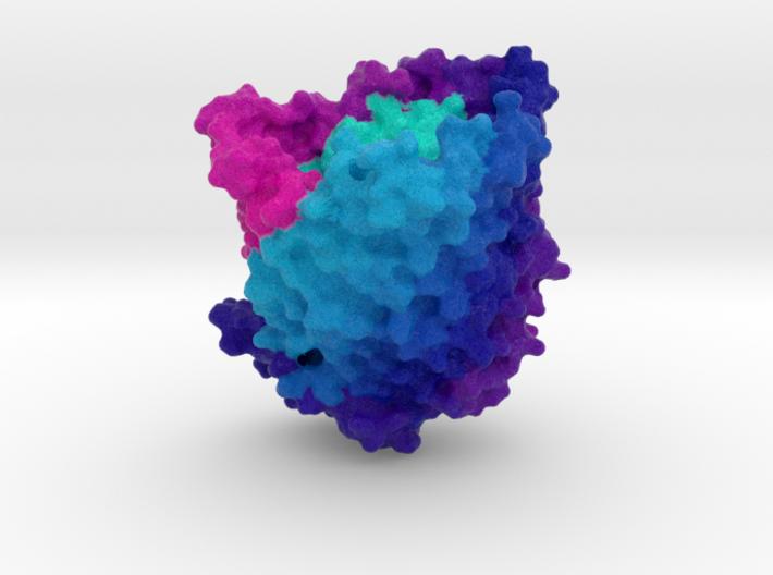 Ferric Hydroxamate Uptake Receptor 3d printed