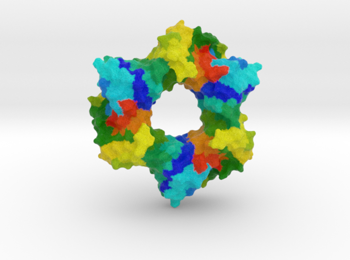 Proliferating Cell Nuclear Antigen 3d printed
