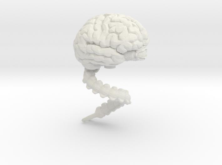 Brain, Large 3d printed