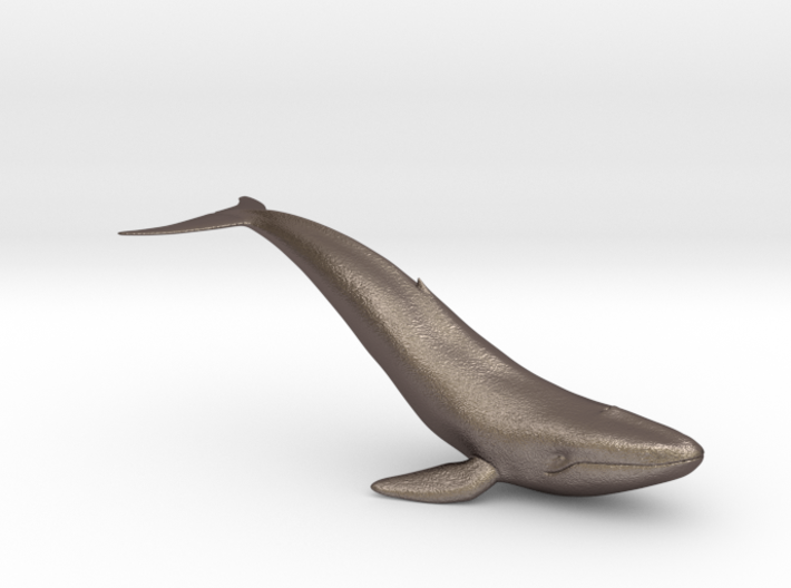 Bluewhale 3d printed