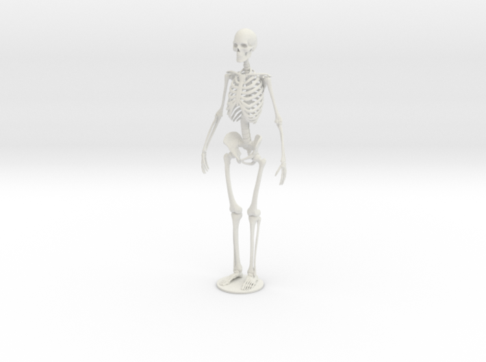 Skeleton new 3d printed
