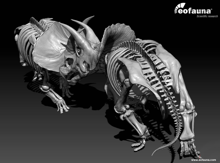Triceratops horridus skeleton 1:48 scale 3d printed two models face to face