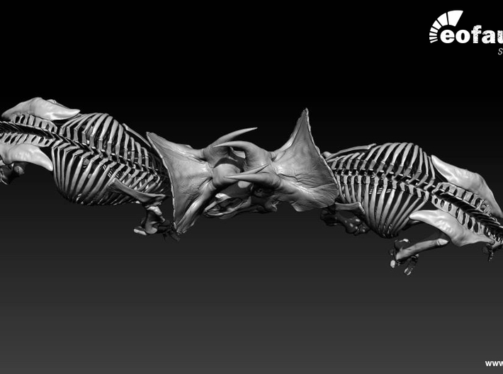 Triceratops horridus skeleton 1:20 scale 3d printed two models face to face