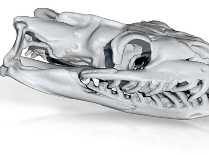 Python 32mm (no loop) 3d printed