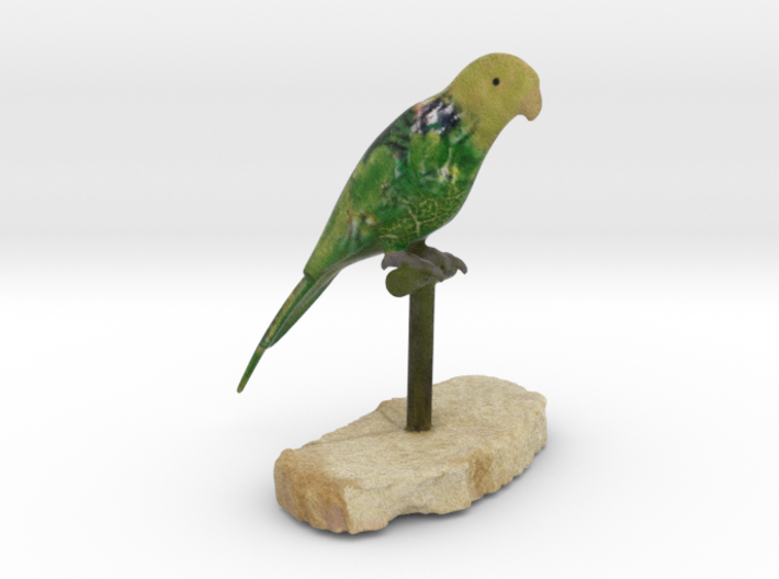 Bird Beauty Lorikeet Full Color by Space 3D 3d printed