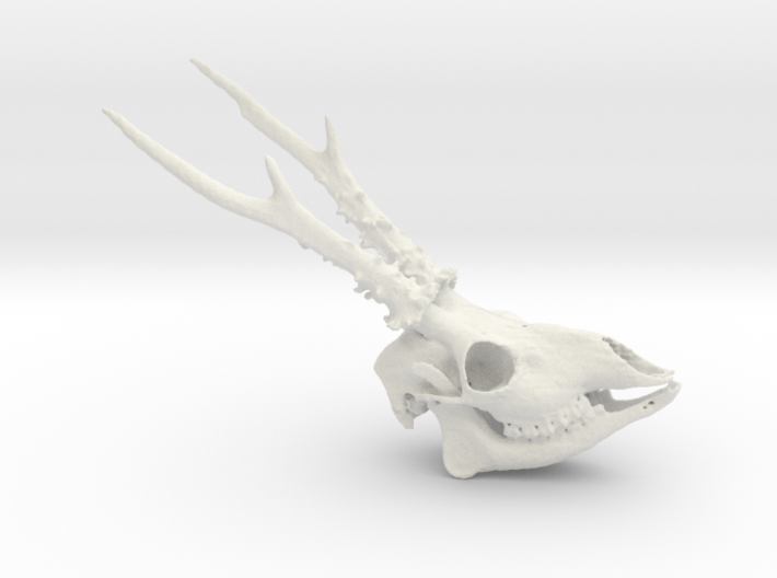 Roe Deer Skull - 110mm 3d printed