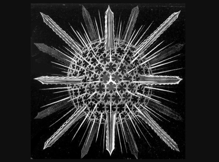 Spumellaria spineless Radiolarian - Science Jewelr 3d printed Ernst Haeckel's drawing of Spumellaria