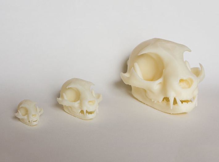 """Mid-Sized Cat Skull Sculpture 3d printed Printed on """"MakerBot: The Replicator"""" at the local college.  Left - mini cat skull model, Middle - Standard size model, Right - Large near-life-size model"""
