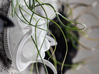 Bulbophyllum Gracilis Planter 3d printed