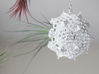 Radiolaria Platonica Planter 3d printed Tillandsia species: T. filifolia