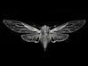 Cicada 3d printed material: sterling silver. Photograph by Andrew Grodner.