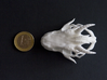 Small Dragon Skull 3d printed Next to euro coin