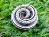 Nautilus pocket sculpture 3d printed Stainless steel is a polished finish too.