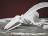 Giglioli's Whale Skeleton 3d printed