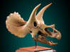 Triceratops skull - dinosaur model 3d printed Actual product photo