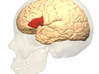 Frontal Lobe Charm (Broca's area) 3d printed Broca's Area in red