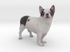 Scanned Chihuahua Dog -890 3d printed