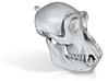 Chimpanzee skull  3d printed