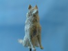 Dog Figurine - Sitting Finnish Spitz 1:43,5 scale  3d printed Frosted Ultra Detail Print, painted white - Photo by BOLLA