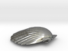 Scallop Shell 3d printed