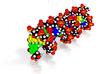 "DNA Molecule Model ""Patrick"", Size = Standard 3d printed"
