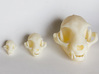 """Cat skull Sculpture 3d printed Printed on """"MakerBot: The Replicator"""" at the local college.  Left - mini cat skull model, Middle - Standard size model, Right - Large near-life-size model"""