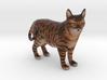 Custom Cat Figurine - Jackson 3d printed